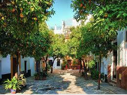 orange-trees-seville